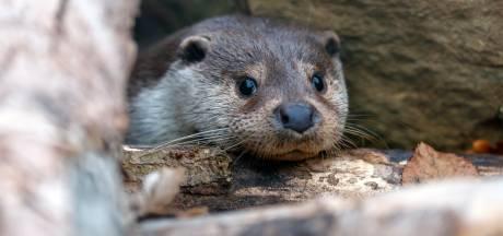Otter kan Ter Aase zuwe straks veilig oversteken via tunnel
