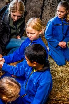 Kinderen leggen konijntjes in de watten: 'Ze krijgen een natje en droogje'