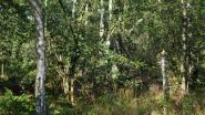 """Butselbos breidt uit met 57 hectare: """"Honderden jaren verloor het gebied aan waarde en groen"""""""