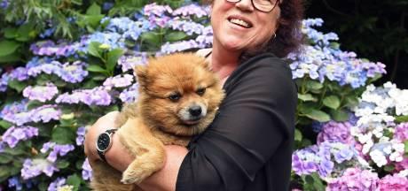 Hondje Flip gered van spuitje, Nenny uit Koewacht is de reddende engel van dieren