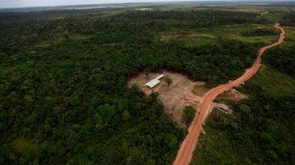 Europa start procedure tegen ons land in strijd tegen illegale houthandel
