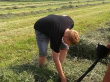 Agriterreur in Maas en Waal terug van weggeweest: prikkeldraad en keien in gemaaid gras
