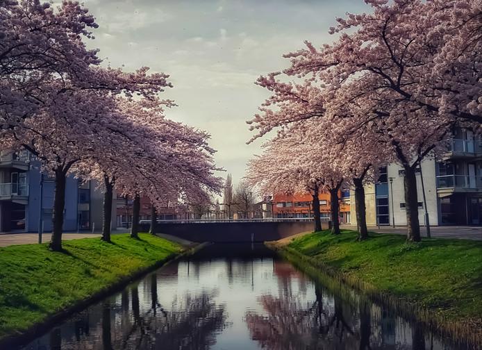 Sander van Winden zette deze bomen in de Oud-Beijerlandse Poortwijk op de gevoelige plaat.