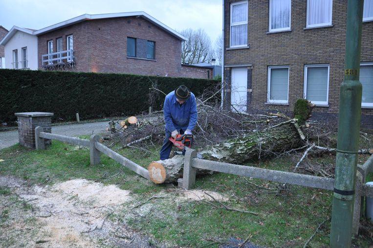 In de Willy Maststraat in Wondelgem werd een boom in een voortuin geveld. Een buurtbewoner kwam de boom verzagen om het hout te gebruiken voor zijn open haard.