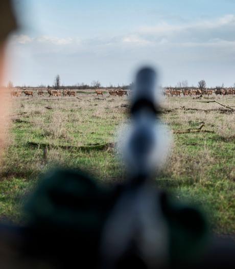 In eerste maand pas 134 edelherten afgeschoten in Oostvaardersplassen
