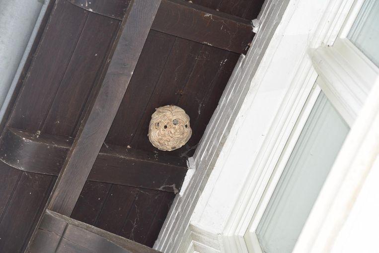 In Rollegem is een nest Aziatische hoornaars onder een dak verdelgd.