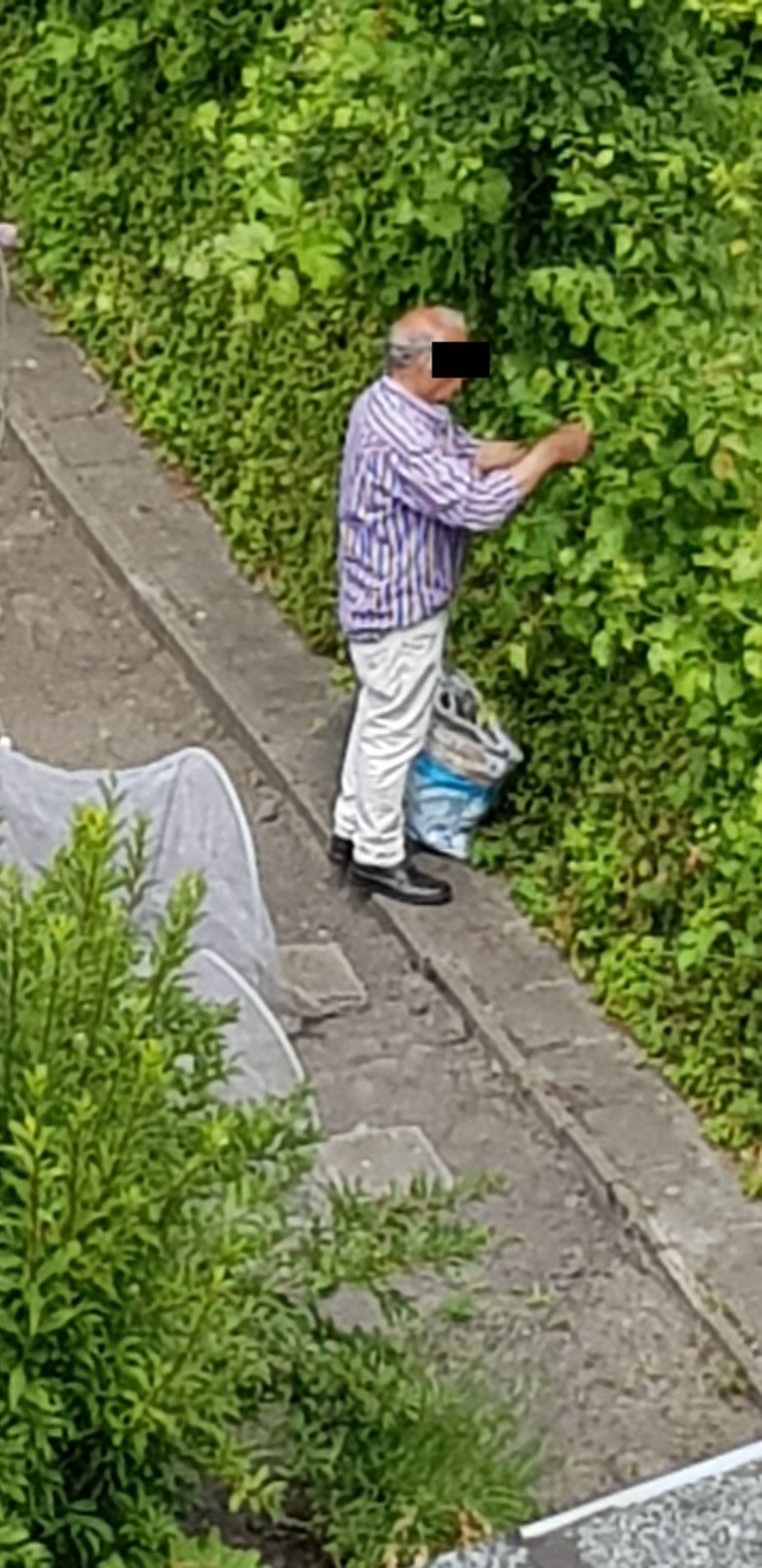 Een buurtbewoner fotografeerde hoe een groep mensen komt plukken in de volkstuintjes zonder toestemming.