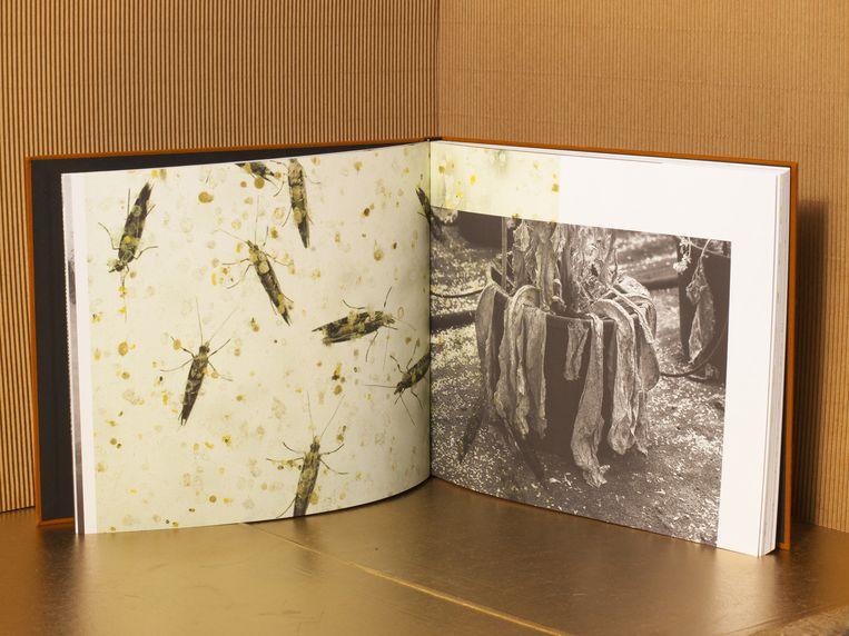 Jos Jansen - Seeds Beeld Studio V