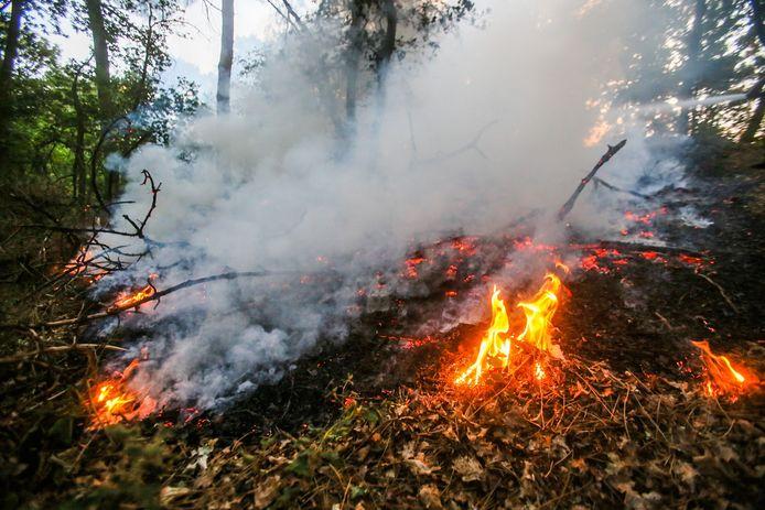 Een kort maar fel bosbrandje in Bakel.