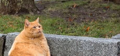 Onze huisdieren zijn massaal te dik