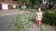 """Bomen in wijk Windmoleken tegen de vlakte tijdens storm: """"Maar het waren niet de zieke exemplaren die omvielen"""""""