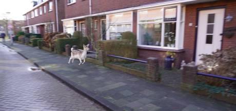 Hert gaat op avontuur in Hendrik-Ido-Ambacht