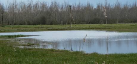 Groene Woud als 'Central Park' tussen drukke steden: Eindhoven, Den Bosch en Tilburg