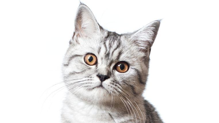 Wat het gezicht van je kat verraadt over het karakter | Dieren ...