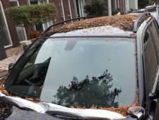 Overal naalden en verzakte straten; de watercipres teistert Ambachtse wijk