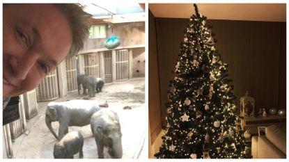 SHOWBITS. Bart Kaëll is in goed gezelschap en weet jij welke BV zijn kerstboom al heeft gezet?