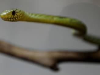 """Expert al 6 keer door slang gebeten: """"Alsof een hamer mijn hand verpletterde"""""""