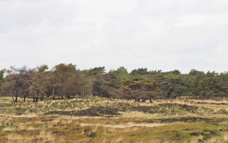 Een beeld van de Kalmthoutse Heide. De filmavonden vinden plaats op het terrein van de scouts aan de rand van de Heide.