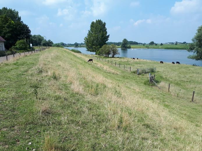 De Maasdijk bij Bokhoven, nabij Den Bosch