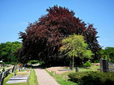 Rotterdamse wandelt langs alle genomineerde 'bomen van het jaar', zondag doet ze Vianen aan