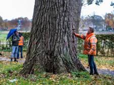 Worpbewoners doen ultieme poging om twee populieren te redden: Deventer huurt bomenexpert in