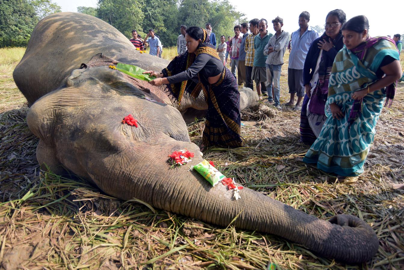 Een vrouw spreekt een gebed uit bij een door elektrocutie overleden olifant in Assam.