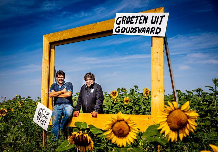 Fotolijst in zonnebloemenveld langs de Vaartweg in Goudswaard.