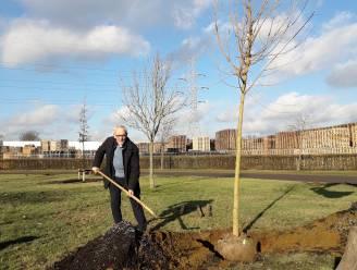 Beringen start met aanplanting van 252 bomen
