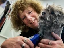 Chocco mag eindelijk weer naar de trimsalon: 'Gewoon zielig als je ziet hoe de dieren eruit komen te zien'