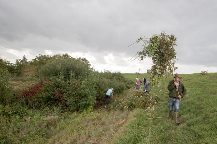 Om de bijzonder natuurwaarden van Schor Alteklein te beschermen, moet regelmatig het gras worden gemaaid en opgeruimd. Ook binden de vrijwillige beheerder de strijd aan met bramen, die anders het gebied snel zouden overwoekeren.