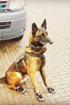 De stoere schoentjes van Zutphense politiehond Spike