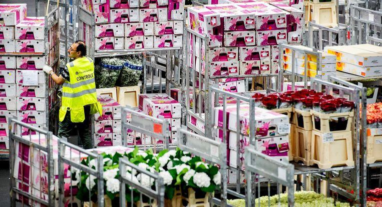 De bloemenveiling in Aalsmeer. Beeld ANP