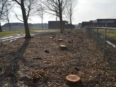 Comité BlijvenSpetteren teleurgesteld in plan gemeente Tholen om kaalslag goed te maken