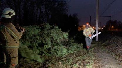 Storm Ciara trekt over de regio: meer dan 200 oproepen aan Oostkust, nergens grote schade