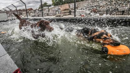 Honden plonzen in nieuwe zwemvijver