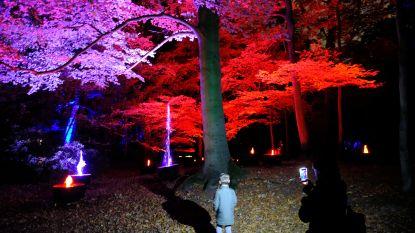 Prachtig lichtfestival in Antwerps Rivierenhof geopend