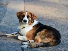 Almelose hondenliefhebber krijgt werkstraf voor online terreur
