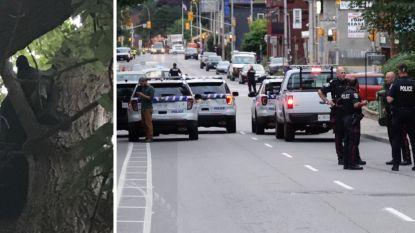 Zwarte beer verschuilt zich in boom in Canadese hoofdstad Ottawa