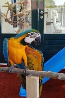 Zoektocht naar papegaai Tycho gaat verder