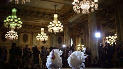 Niet alle Amerikaanse presidenten verleenden kalkoenen gratie: geschiedenis van een vreemde traditie