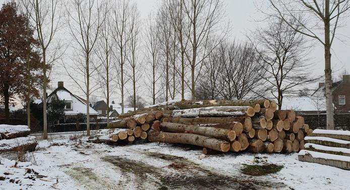 Een deel van de iconische populieren van de A2 tussen Boxtel en Best is terecht gekomen bij Klompenfabriek Traa in Liempde.