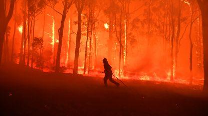 En toch branden bossen niet vaker. Wel feller