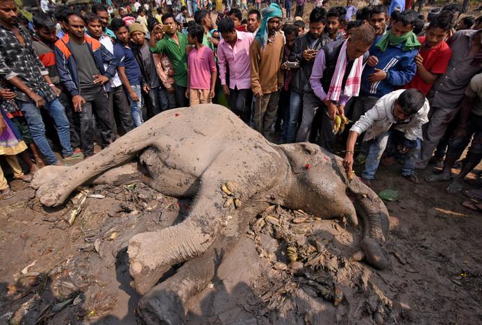 Onder massale belangstelling van omstanders probeert een man een banaan in de bek te stoppen van een olifant die gewond is geraakt bij een treinongeluk vlakbij het Habaipur-station in het Indiase Hojai. Foto Anuwar Hazarika