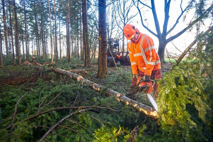 Uden wil via een excursie laten zien wat het effect is van de veelbesproken bosomvorming in de Peelse bossen.