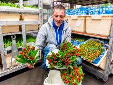 Export sierteelt naar Duitsland blijft achter