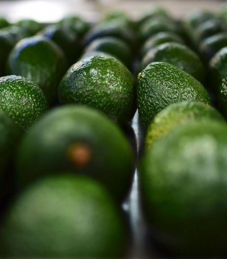Eerste Ethiopische avocado's onderweg naar Nederland