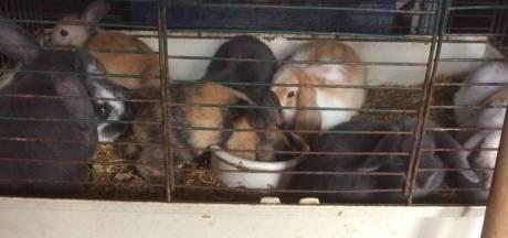 Dierenpolitie vindt 250 knaagdieren op 6 vierkante meter
