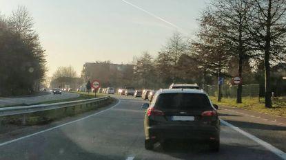 Files aan Europalaan door slecht afgestelde verkeerslichten