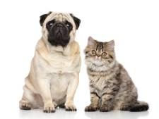 Max blijft populairste naam voor hond, Luna op één bij kat