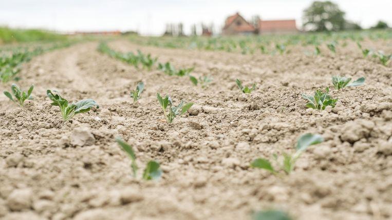 Ook de landbouw kreunt onder de aanhoudende droogte.